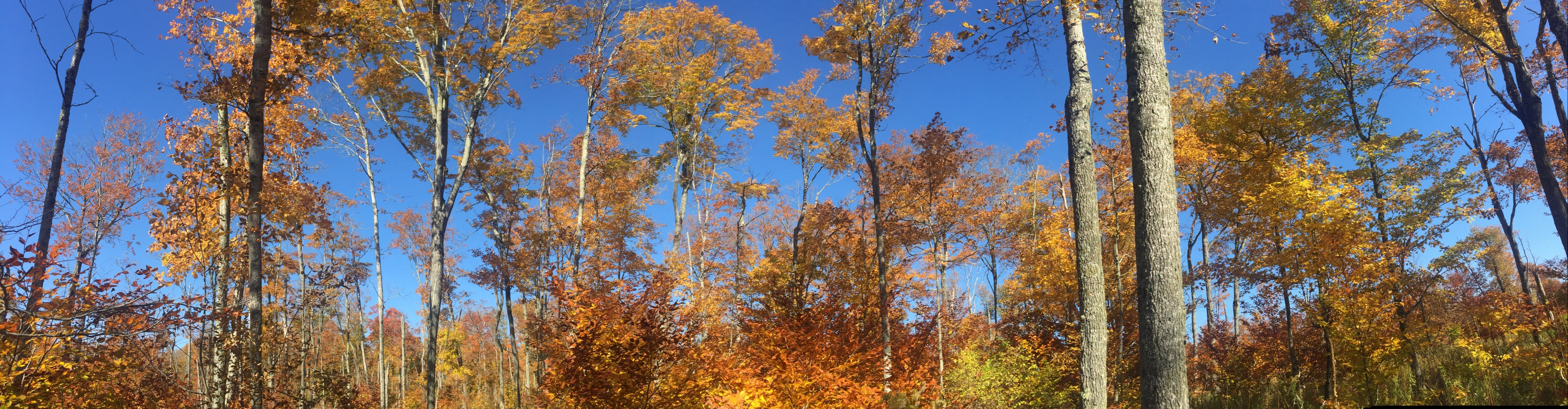 Fall Trees out in the Watershed